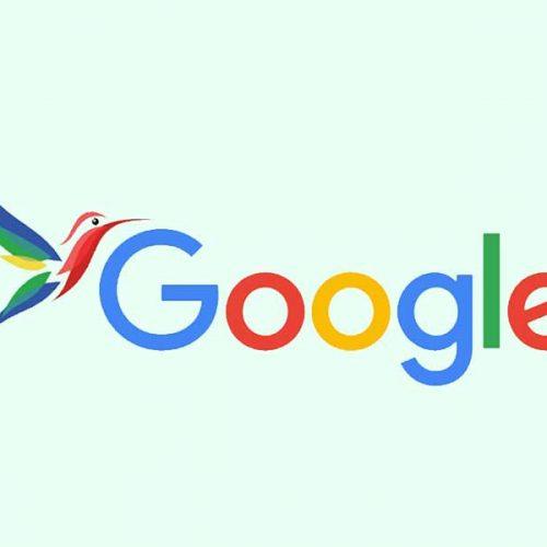 الگوریتم مرغ مگس خوار چست؟ گوگل با این پرنده کوچک چه میکند؟